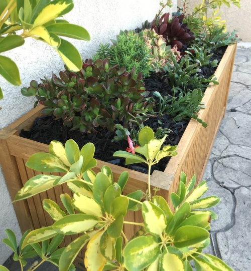 large rectangular planter boxes