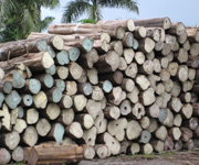 Plantation Grown Certified Teak Logs
